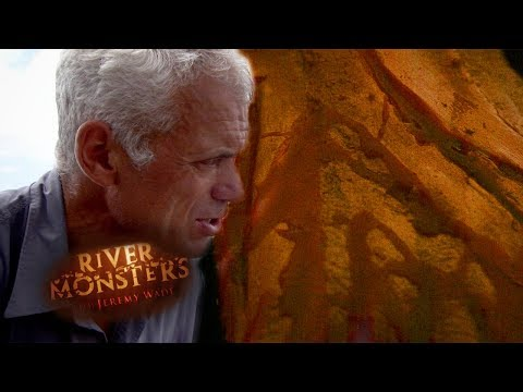 Wolf Fish Victim Needed Over 100 Stitches After Grisly Attack! | HORROR STORY | River Monsters
