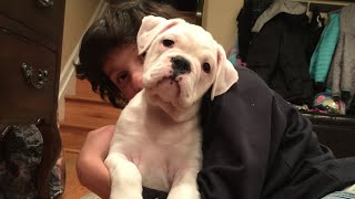 New Puppy And Name Reveal (wk 208.5) | Bratayley