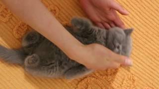 Ну очень спящий котенок)))