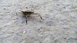 India biggest insects kill how many pepole