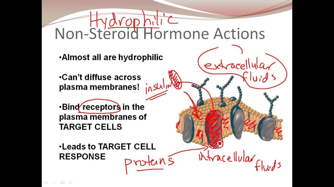 Principles of Biochemistry/Hormones