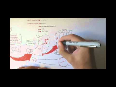 Digestive System Physiology Overview