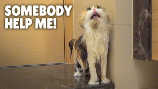 ChuChu Ran Away During a Bath! | Kittisaurus