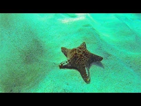 Jonelle's Starfish