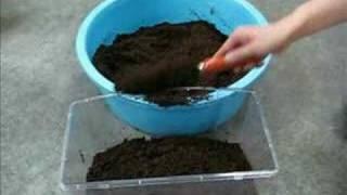 カブトムシの幼虫を発酵マットで飼育するときの発酵マットの詰め具合。 ...