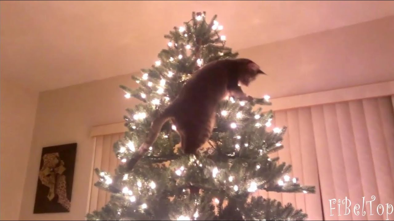 Кошки и новогодние елки. Подборка 2015