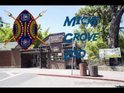 Wild Excursions: Micke Grove Zoo