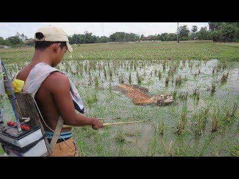 Wow! Boys Electricity Fishing Catch Komodo Dragon in Hole - How To Catch Komodo Dragon in cambodia