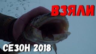 Чудское озеро,рыбалка.Взяли НАЛИМА в Псковской области