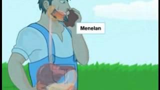 Sistem Pencernaan Makanan Pada Manusia - Hesti Setiawati PSB 2011