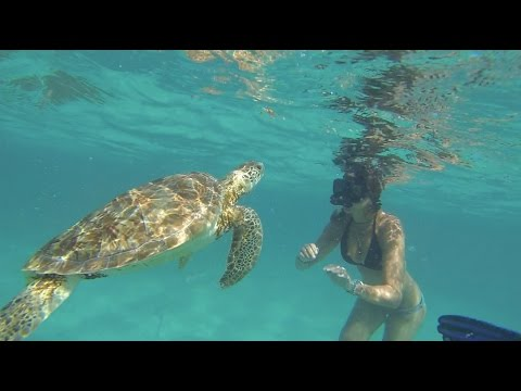 Caye Caulker - Belize, shark ray alley