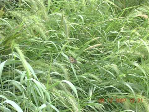 plants in the tropical grassland some temperate grassland plants youtube