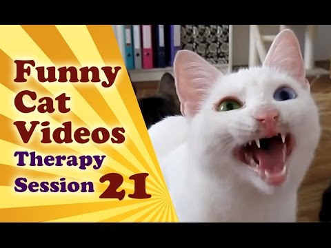 Cats Meowing Compilation Of Cats Meowing Funny | Funny Cat Videos Therapy