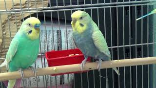 Помогите придумать имена для попугаев