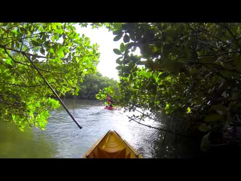 GUADELOUPE - Mangrove Kayaking with Langley Resort Fort Royal Guadeloupe - FRENCH CARIBBEAN