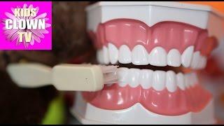 Обучающие видео для детей. Как правильно чистить зубки. Клоун Жорик(Клоун Жорик научит детей чистить зубки! http://kloun-svet.by/ Подписка на канал: ..., 2016-03-06T17:03:14.000Z)