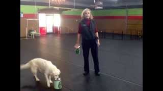 Trailer: Charlotte North Carolina's Premier Dog Training Center!