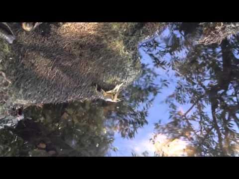 Раки, Река Урал г. Магнитогорск, Заводской пруд Crayfish, River Ural Magnitogorsk, Factory Pond
