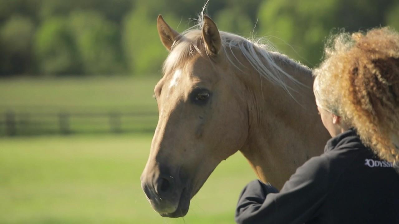 Les chevaux en vacances en Ontario