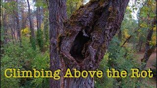 Tree Felling Scenarios -INSANE DECAY