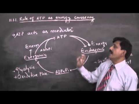 Role Of ATP by Khemchand