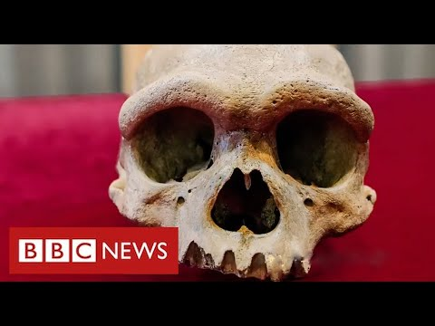 """New human species found in China could be our """"closest evolutionary relative"""" - BBC News"""
