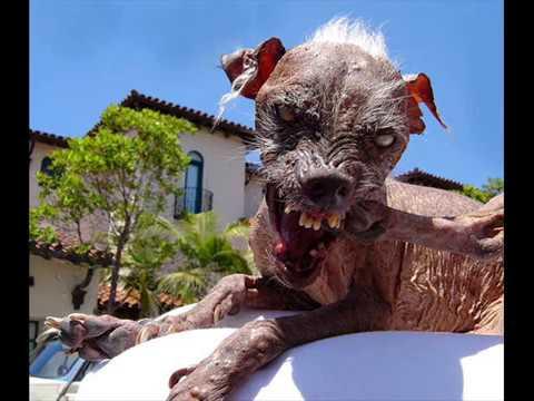 Sam O Cachorro Feio 3