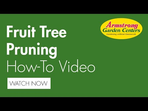 How To Prune A Fruit Tree - Armstrong Garden Centers