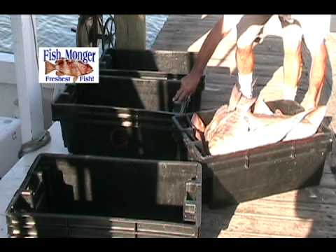 FMB Seafood Fish Monger Fresh Fish.  Fort Myers Beach Restaurants YouTube Video