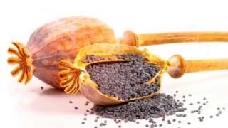 МАК ПОЛЬЗА | лечебные свойства мака, мак пищевой польза, мак свойства польза.