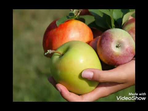 Чем полезны яблоки для здоровья и красоты.