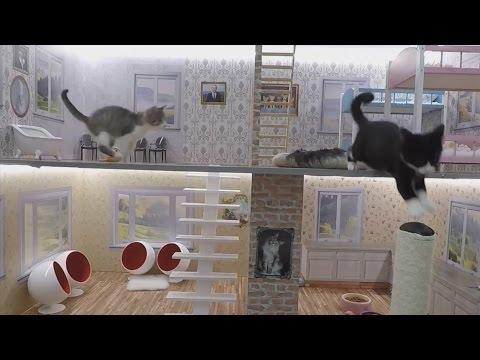 Icelandic cat reality show: Keeping up with the Kattarshians