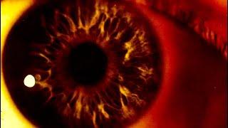 The Cure - The Snakepit (LYRICS ON SCREEN) 📺