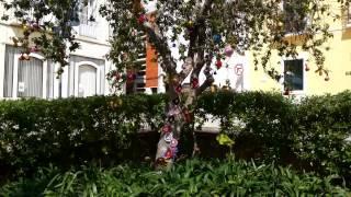 португалия.красивые деревья