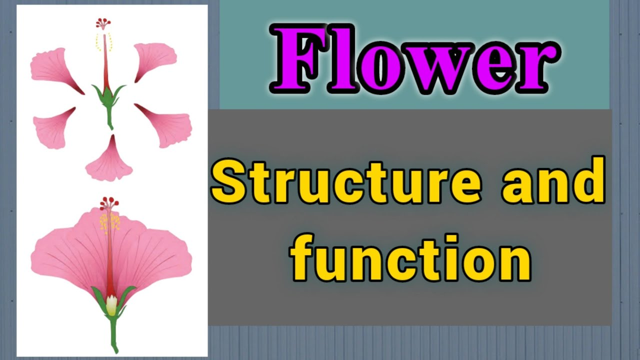 Plants structure and function - Flower - YouTube