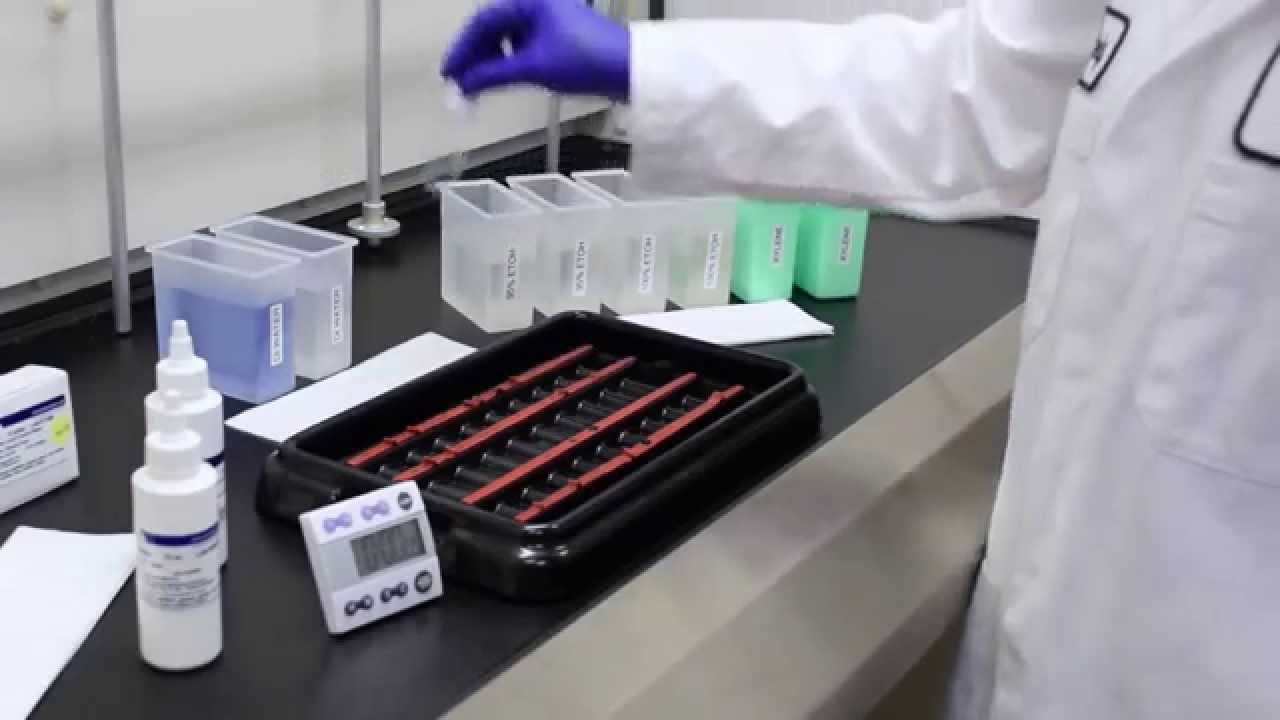 Fungi-Fluor Kit for Fungal Detection (for U S  & outside of Europe orders)