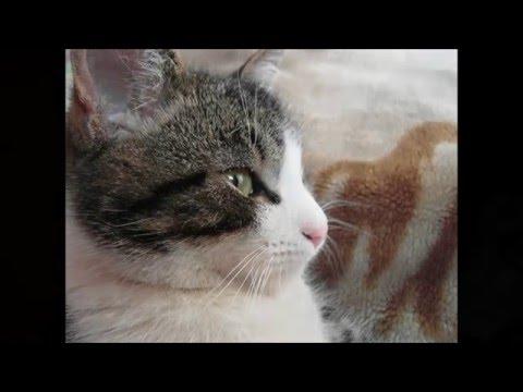 Искусственное вскармливание котят Кошка Кот Котенок