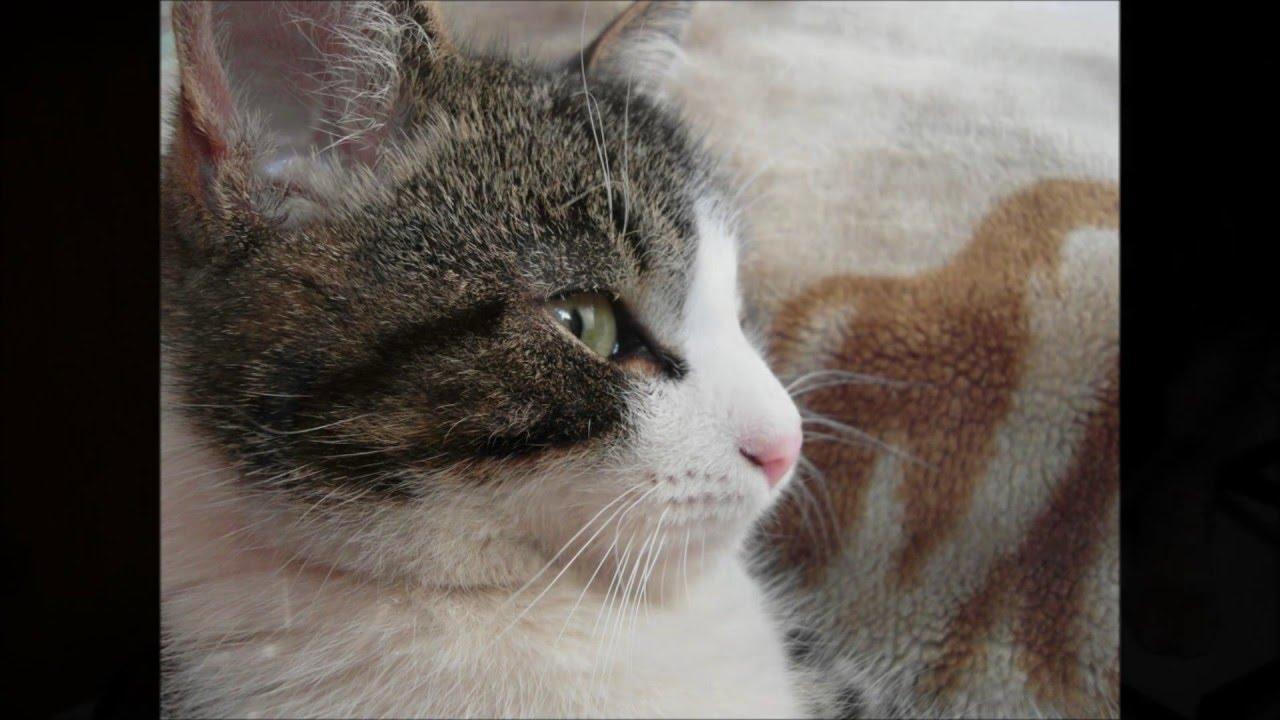 Что говорят когда умирает кот