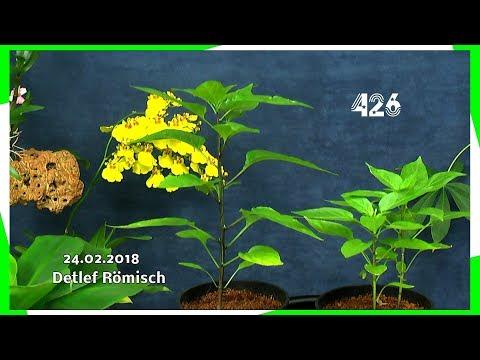 Kresse / Mimose / Chili / Orchideen / Sphagnum Moos und mehr in der Folge 426