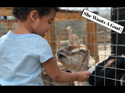 Getting A Pet Goat?