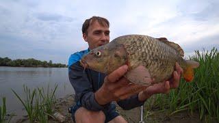 ЖОР крупного КАРАСЯ и мелкого САЗАНА на жмых. Рыбалка Астрахань.