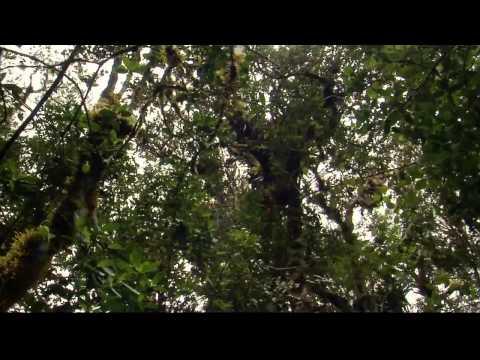 Экватор [5_6] Парадокс Анд  2005