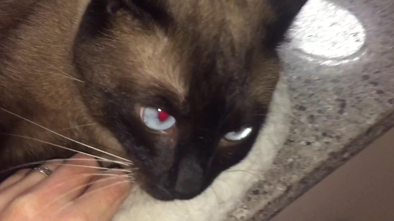 Кот оберег что это