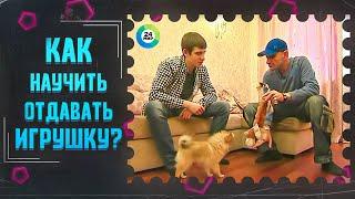 ТВ МИР-Как научить собаку отдавать игрушку хозяину