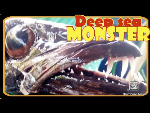 Part 1| Night Jigging| Deep Sea Fish| Tahiti Pacific Island