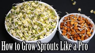 How to Grow Sprouts | Lentils Sprouts Recipe | How to Grow Sprouts at Home | Nehas Cookhouse