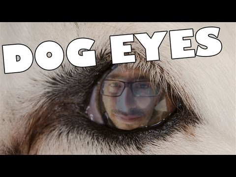 DOG EYES – Pigeon Pictures