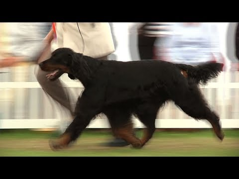 Southern Counties Dog Show 2017 - Gundog group Highlights