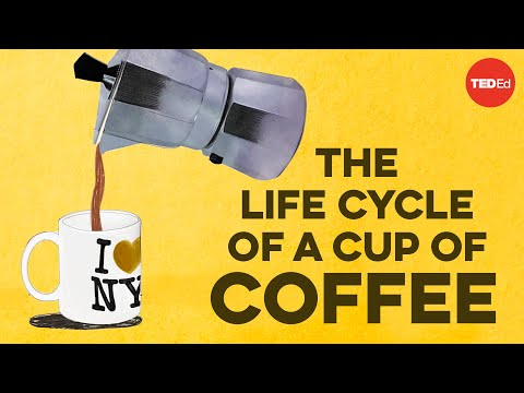 The Life Cycle of a Cup of Coffee: The Journey from Coffee Bean, to Coffee Cup
