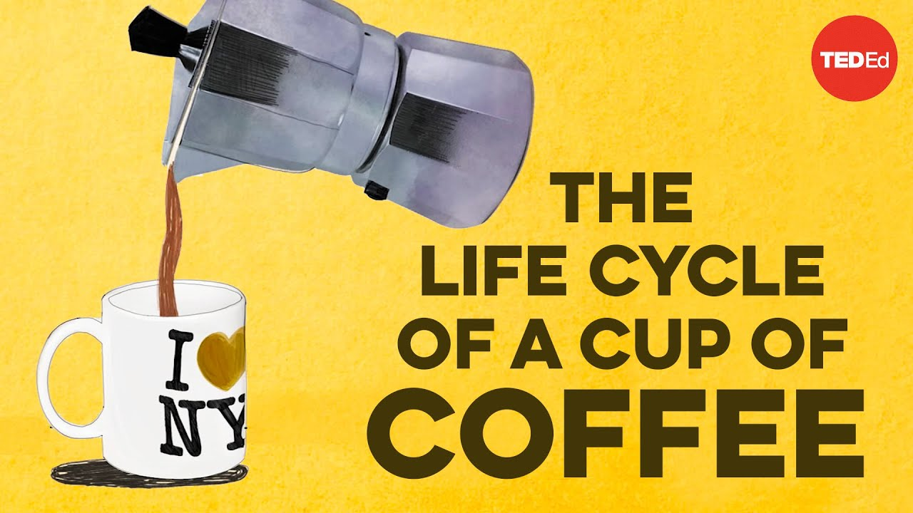 The life cycle of a cup of coffee